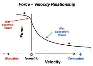 aging and the force velocity relationship of Using physics, you can show the relationship between velocity and power for example, you can calculate the velocity of a car using the velocity form of the power equation here are some practice questions that you can try practice questions the product of force and what quantity is equivalent.